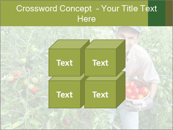 Man picking tomatoes PowerPoint Template - Slide 39