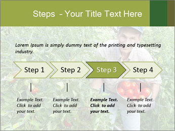 Man picking tomatoes PowerPoint Template - Slide 4