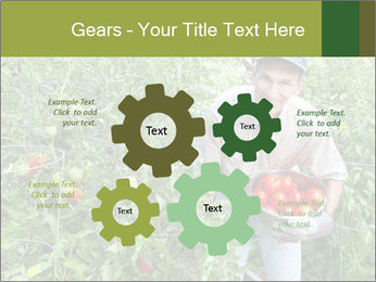 Man picking tomatoes PowerPoint Template - Slide 47