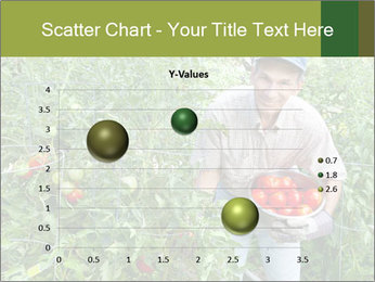 Man picking tomatoes PowerPoint Template - Slide 49