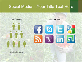 Man picking tomatoes PowerPoint Template - Slide 5