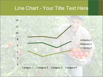 Man picking tomatoes PowerPoint Template - Slide 54