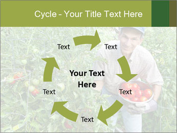 Man picking tomatoes PowerPoint Template - Slide 62