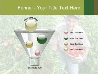 Man picking tomatoes PowerPoint Template - Slide 63