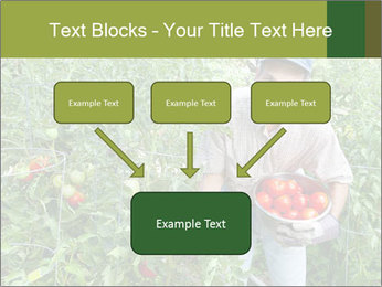 Man picking tomatoes PowerPoint Template - Slide 70