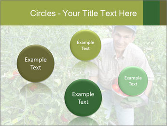 Man picking tomatoes PowerPoint Template - Slide 77