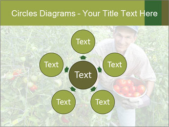 Man picking tomatoes PowerPoint Template - Slide 78