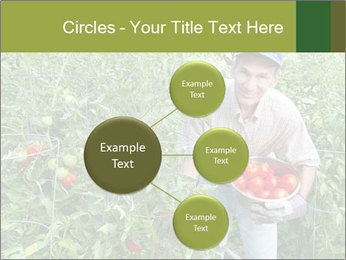 Man picking tomatoes PowerPoint Template - Slide 79