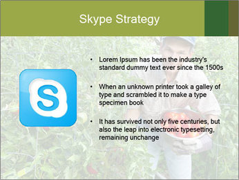 Man picking tomatoes PowerPoint Template - Slide 8