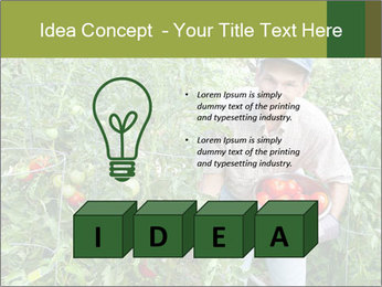 Man picking tomatoes PowerPoint Template - Slide 80