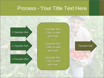Man picking tomatoes PowerPoint Template - Slide 85
