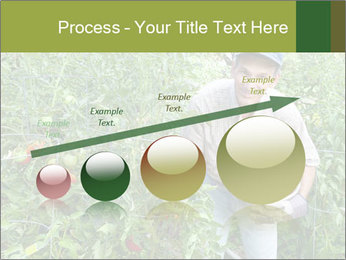 Man picking tomatoes PowerPoint Template - Slide 87