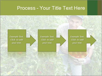 Man picking tomatoes PowerPoint Template - Slide 88