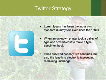Man picking tomatoes PowerPoint Template - Slide 9