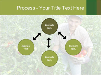 Man picking tomatoes PowerPoint Template - Slide 91