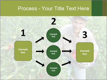 Man picking tomatoes PowerPoint Template - Slide 92