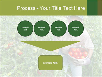 Man picking tomatoes PowerPoint Template - Slide 93