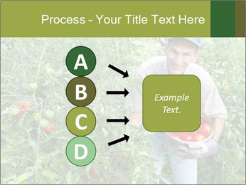 Man picking tomatoes PowerPoint Template - Slide 94