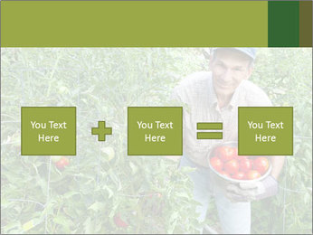 Man picking tomatoes PowerPoint Template - Slide 95