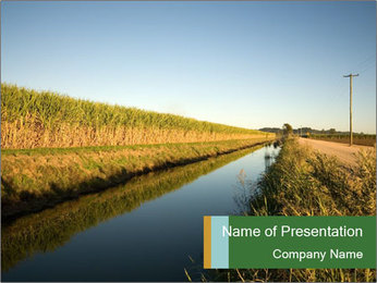 A sugar cane field PowerPoint Template