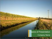 A sugar cane field PowerPoint Templates