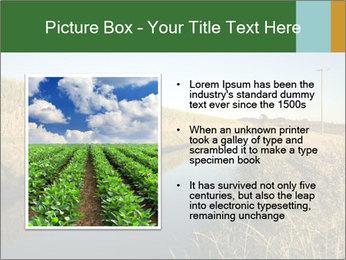 A sugar cane field PowerPoint Template - Slide 13