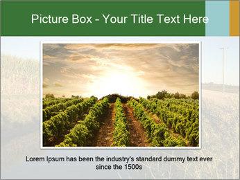 A sugar cane field PowerPoint Template - Slide 16