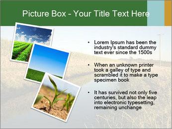 A sugar cane field PowerPoint Template - Slide 17