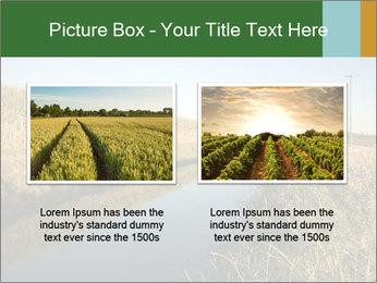 A sugar cane field PowerPoint Template - Slide 18