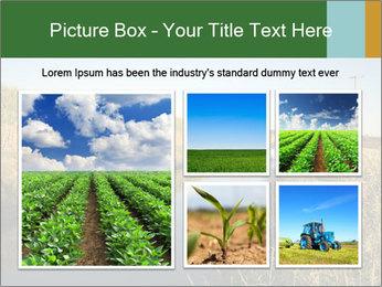 A sugar cane field PowerPoint Template - Slide 19