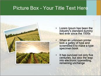 A sugar cane field PowerPoint Template - Slide 20
