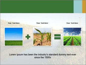 A sugar cane field PowerPoint Template - Slide 22