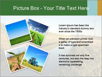 A sugar cane field PowerPoint Template - Slide 23
