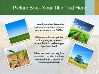 A sugar cane field PowerPoint Template - Slide 24