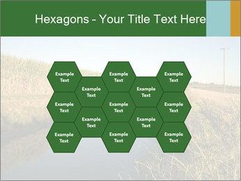 A sugar cane field PowerPoint Template - Slide 44