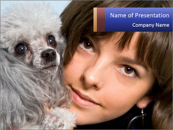 Grey poodle PowerPoint Template