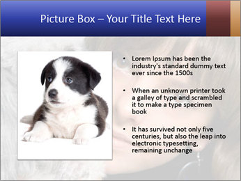 Grey poodle PowerPoint Template - Slide 13