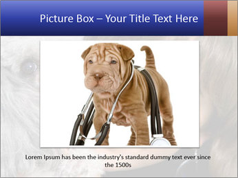 Grey poodle PowerPoint Template - Slide 15