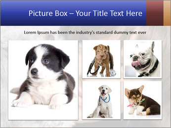 Grey poodle PowerPoint Template - Slide 19