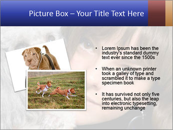 Grey poodle PowerPoint Template - Slide 20