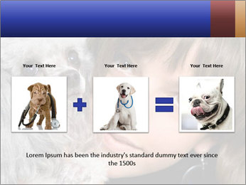 Grey poodle PowerPoint Template - Slide 22