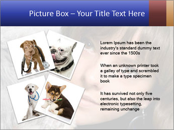 Grey poodle PowerPoint Template - Slide 23