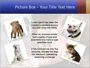 Grey poodle PowerPoint Template - Slide 24