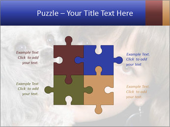 Grey poodle PowerPoint Template - Slide 43
