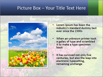 The Netherlands PowerPoint Template - Slide 13