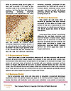 0000090861 Word Templates - Page 4