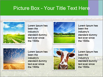 Cheese production PowerPoint Template - Slide 14