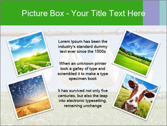 Cheese production PowerPoint Template - Slide 24