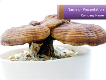 Chinese Mushroom PowerPoint Template - Slide 1
