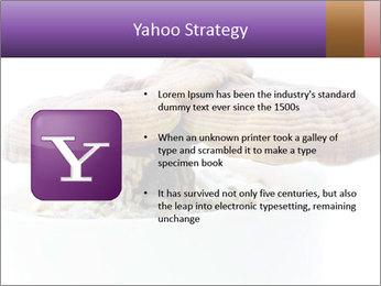 Chinese Mushroom PowerPoint Template - Slide 11